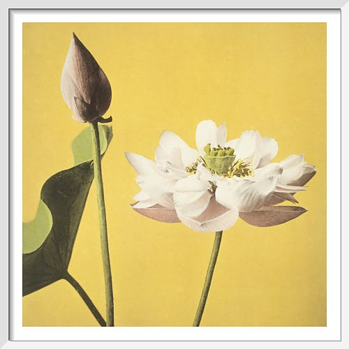Lotus, from Some Japanese Flowers by Ogawa Kazumasa