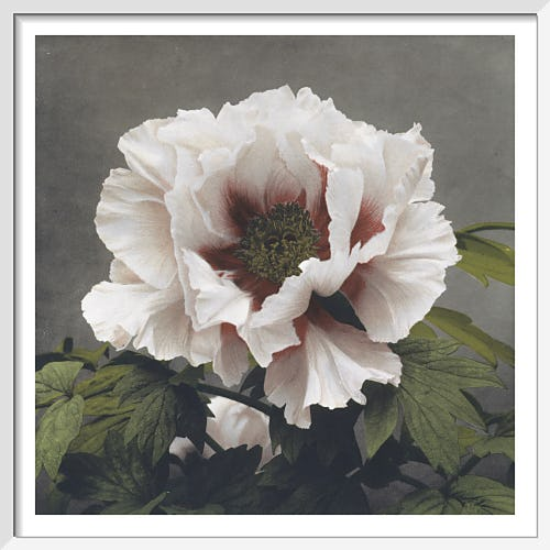 Tree Peony, from Some Japanese Flowers by Ogawa Kazumasa