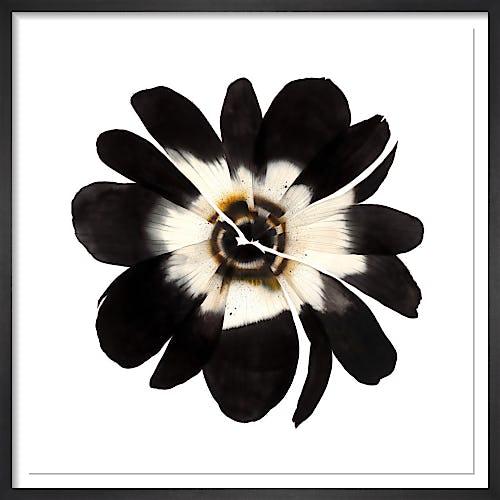 Dark Anemone by Stephen Doherty