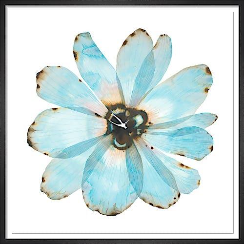Blue Bloom by Stephen Doherty