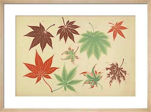 Maple Leaves II by The Yokohama Nursery Co Ltd