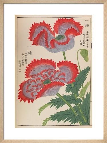 Poppy I by Iwasaki Tsunemasa
