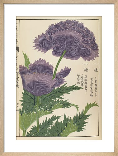 Poppy II by Iwasaki Tsunemasa