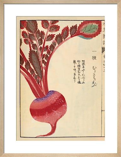 Radish by Iwasaki Tsunemasa