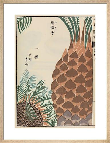 Japanese Sago Palm by Iwasaki Tsunemasa