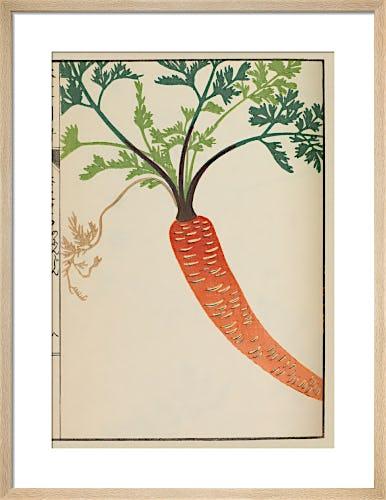 Wild Carrot by Iwasaki Tsunemasa