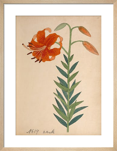 Lesser Tiger Lily by Unknown Japanese Artist