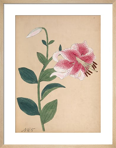 Japanese Lily by Unknown Japanese Artist
