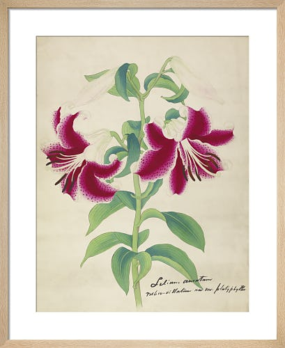 Oriental Lily by Unknown Japanese Artist