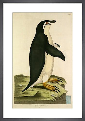 Emperor Penguin by John Frederick Miller