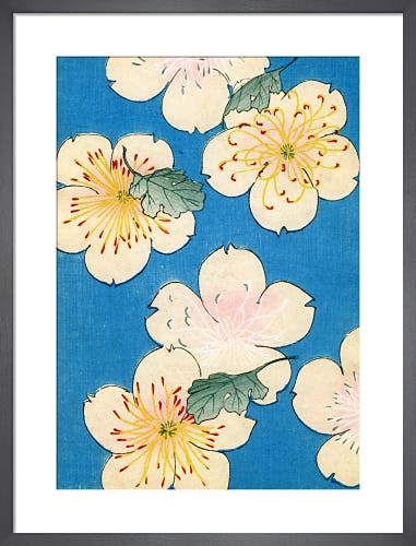 Dogwood Blossoms on Blue, 1882 by Japanese School (19th century)